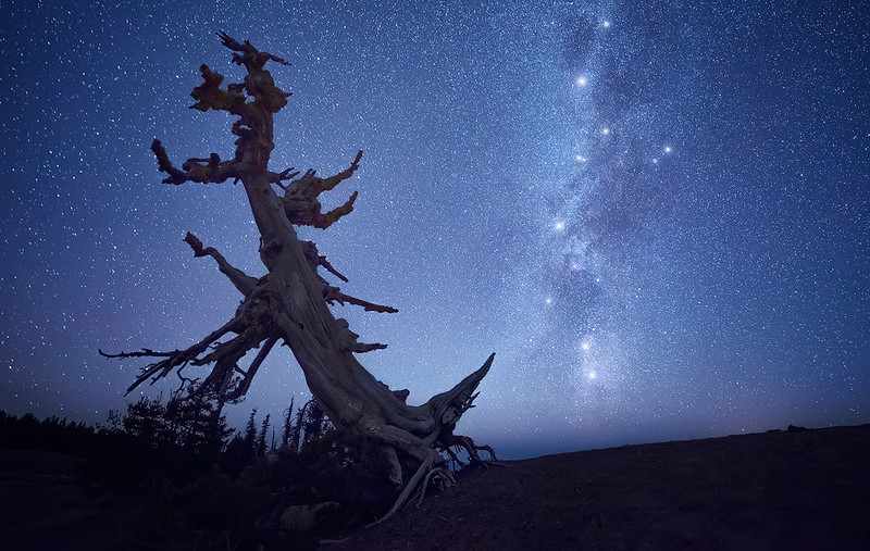 And Old Tree & The Night Sky - Crater Lake National Park, Oregon